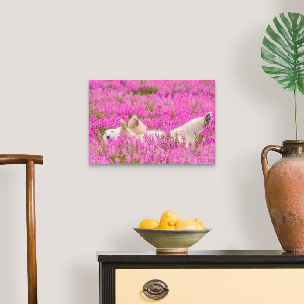 Polar-Bear-Waving-In-A-Bed-Of-Fireweed-Canvas-Art-Print thumbnail 5
