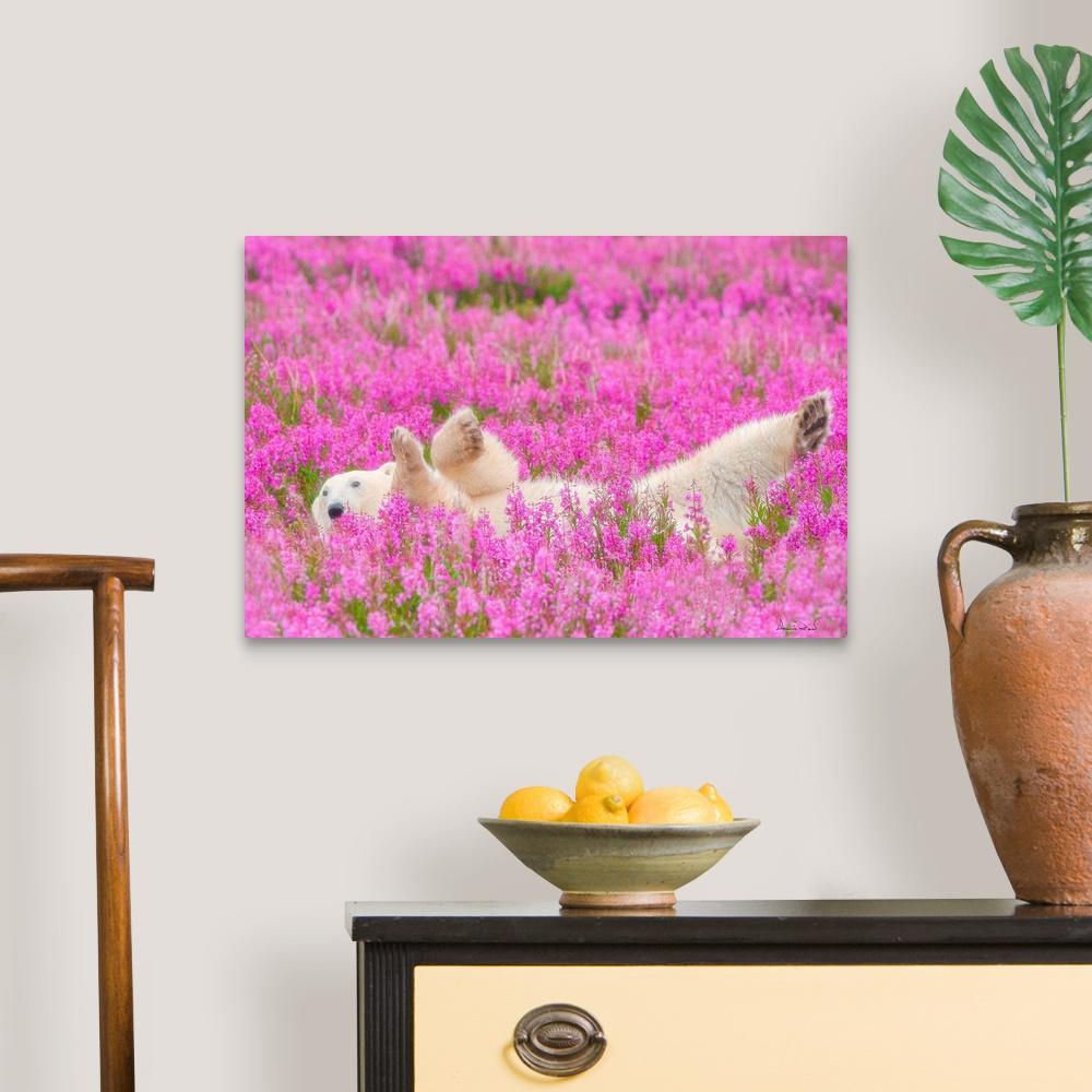 Polar-Bear-Waving-In-A-Bed-Of-Fireweed-Canvas-Art-Print thumbnail 6