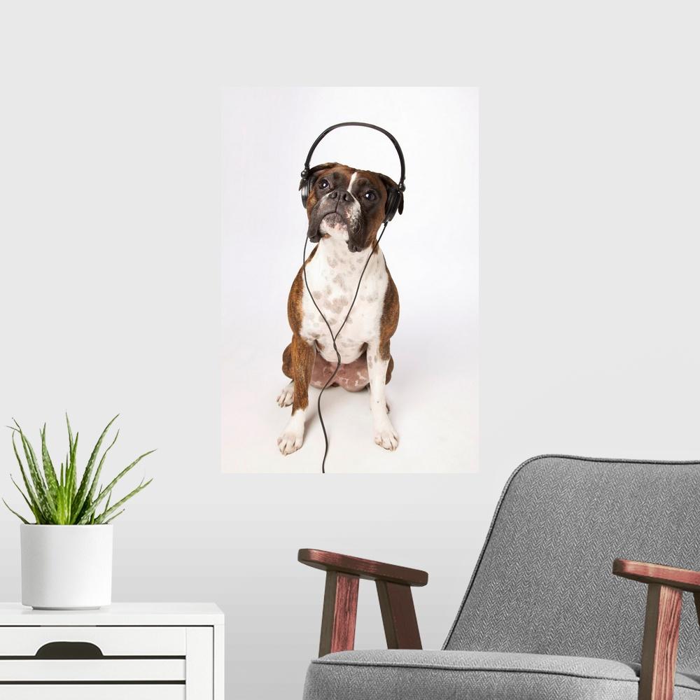 Boxer Dog With Headphones Poster Art Print, Dog Home Decor ...