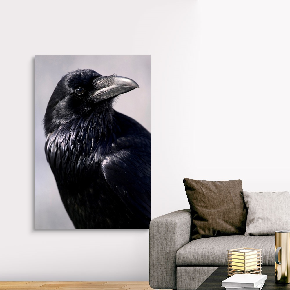 Common Raven Jasper National Park Canvas Wall Art Print Bird Home Decor