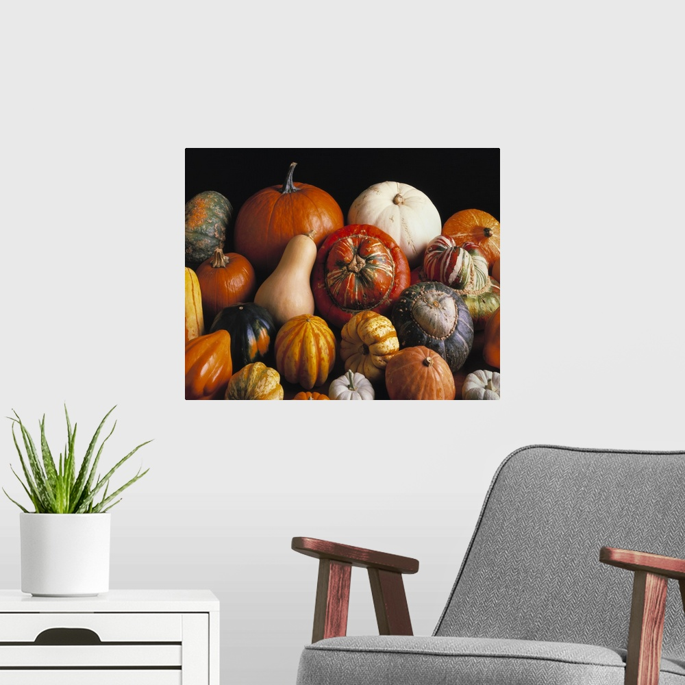 Variety of winter squashes: pumpkins, Poster Art Print ...