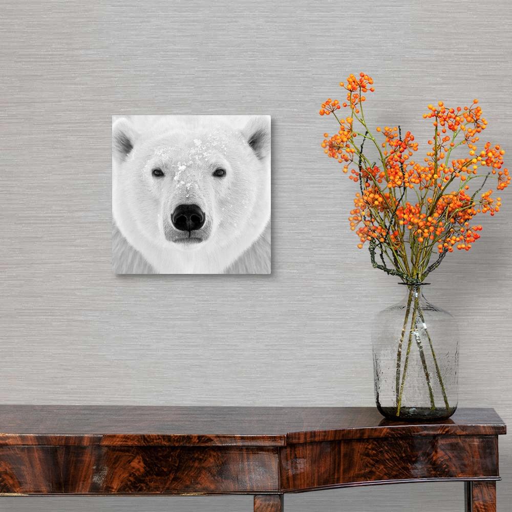Polar-Bear-Canvas-Wall-Art-Print-Bear-Home-Decor thumbnail 6