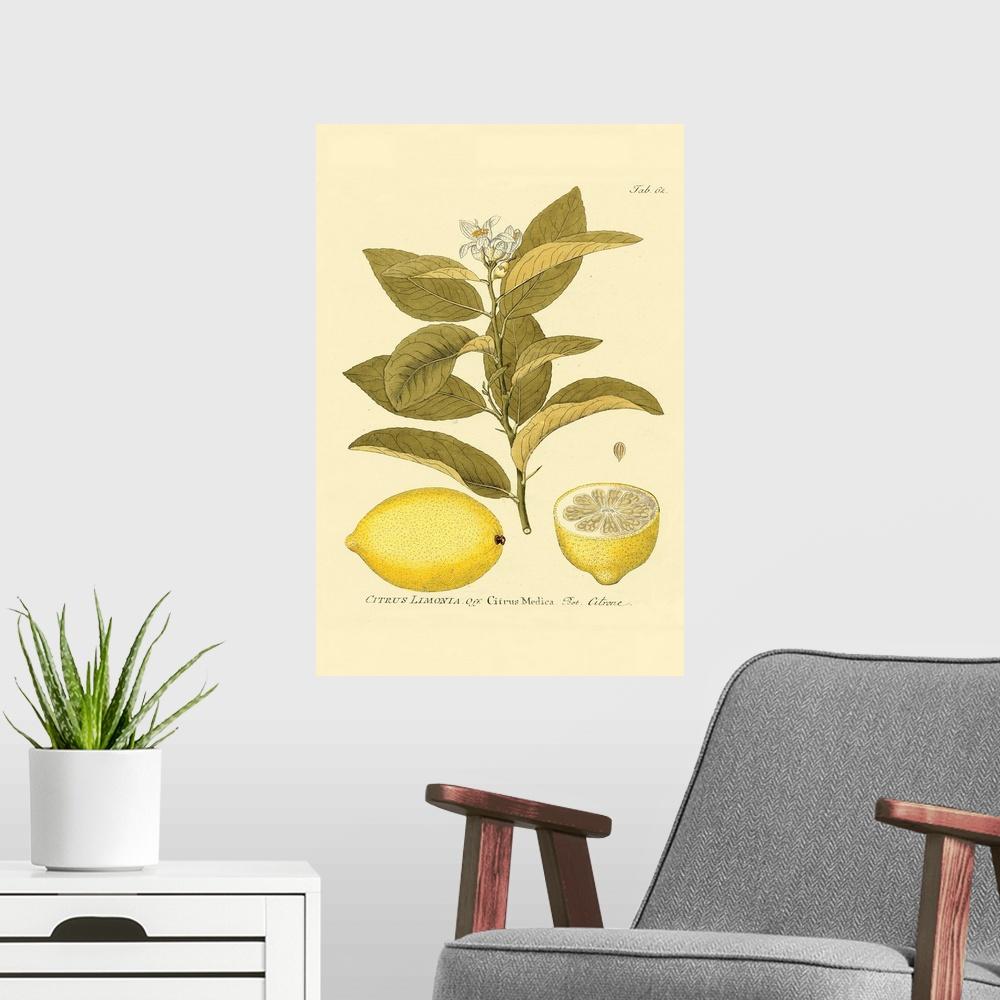 Antique Lemon Poster Art Print Lemons and Limes Home Decor